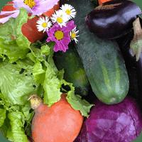 Nos Légumes au détail